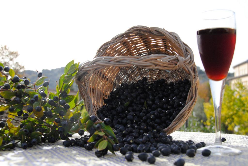 Guida semplice e pratica per coltivare il mirto: simbolo della Sardegna