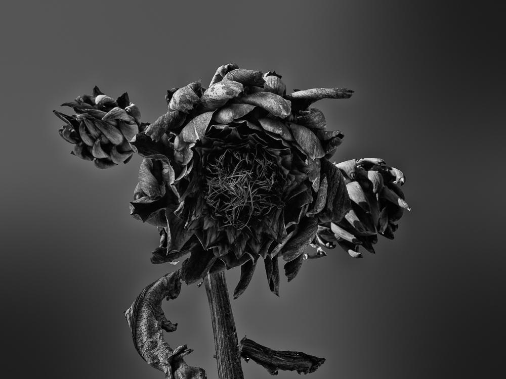 parassiti pianta di mirto