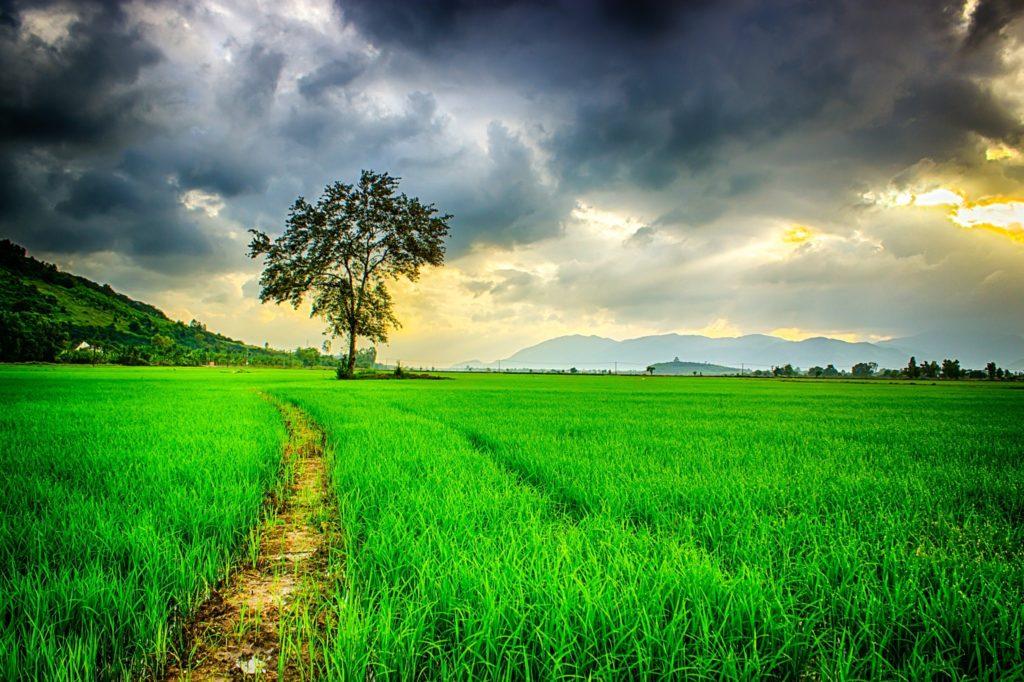 immagine di un paesaggio rurale sotto un cielo scuro in un articolo dedicato al Capodanno in Sardegna e alle sue origini legate all'inizio dell'anno agrario