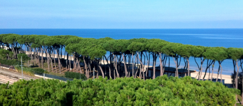picture of a beach with maritime trees in Alghero Italy sardinia in an articole about travel tips