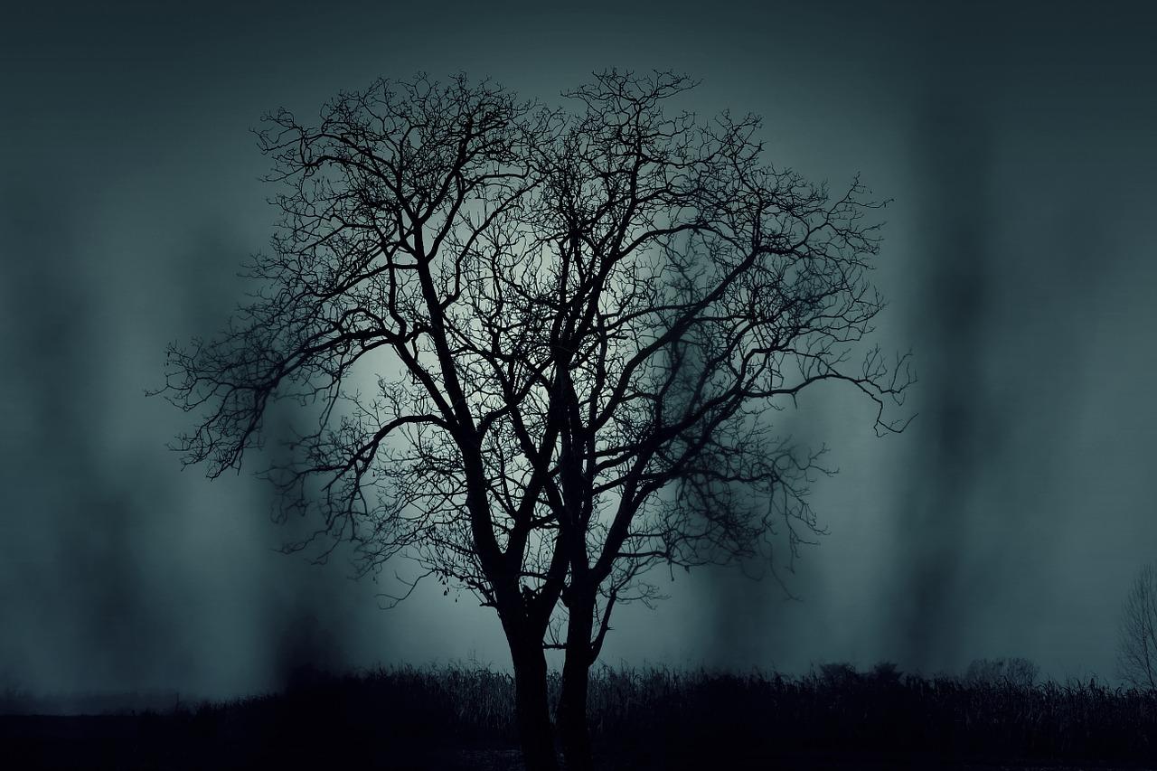 albero nella nebbia