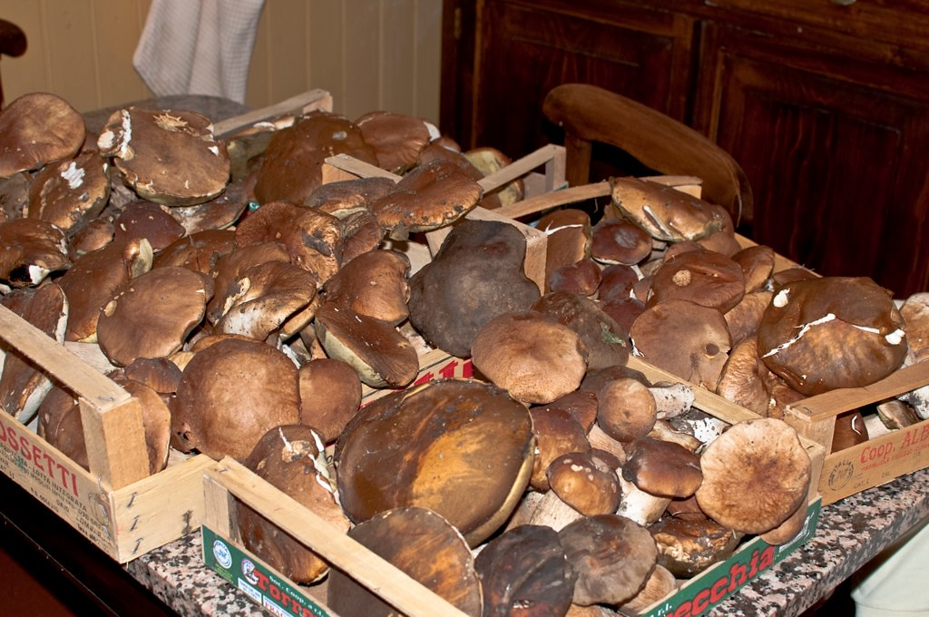 cassette di funghi porcini