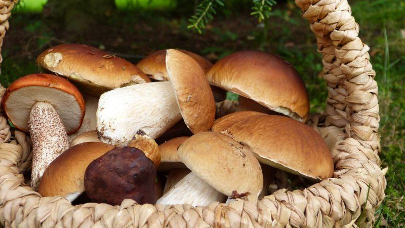 Dove trovare i funghi porcini in Sardegna?