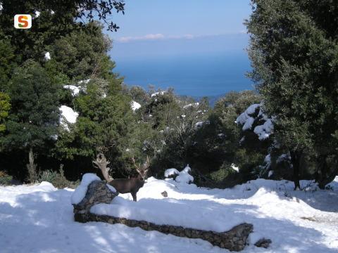 10 Spettacolari immagini della Sardegna con la neve