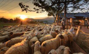 pecore e pastori nei racconti sardi